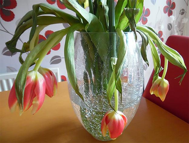 wilted tulips delivered